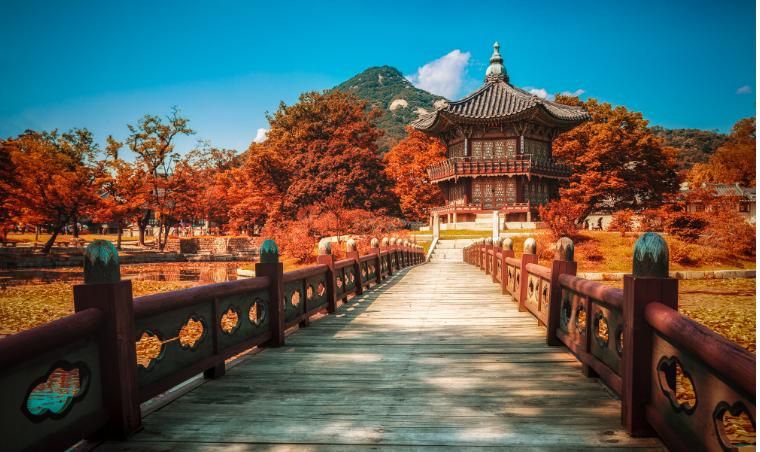 Hati-hati membawa produk hewani ke Korea jika tidak ingin di denda